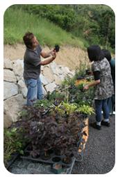 苔玉づくりの手順1(植物選び)